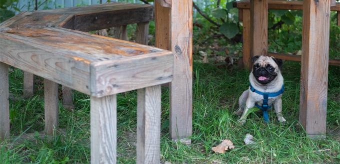 puppy playing hide & seek