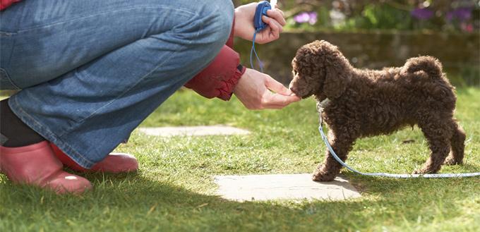 puppies recall training