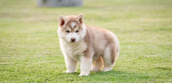 recall puppy training