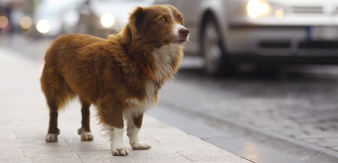 run away dog