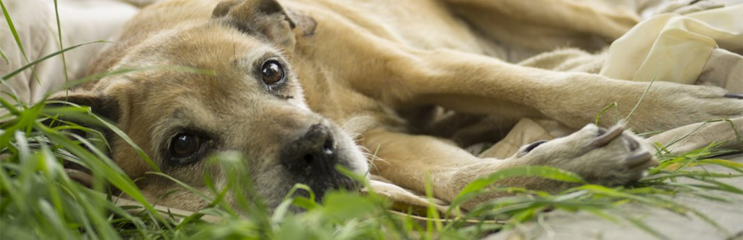 saying goodbye to your dog – signs that your dog is dying