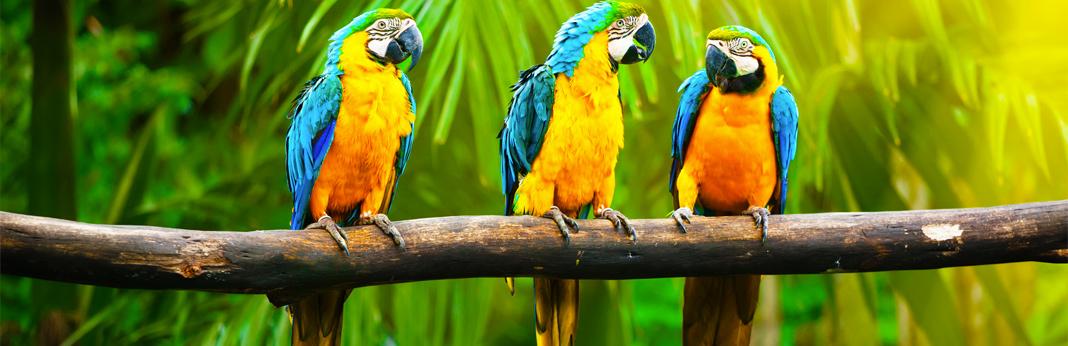 top-5-smartest-pet-birds