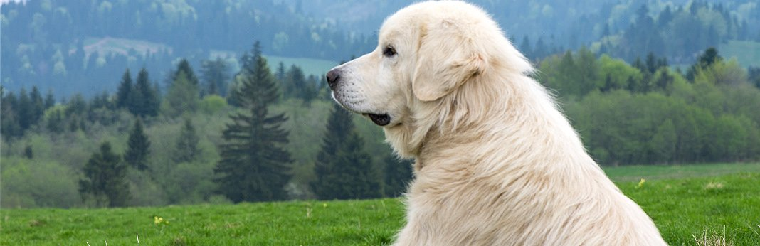 what-are-the-biggest-dog-myths