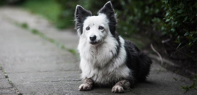 what causes dog acne