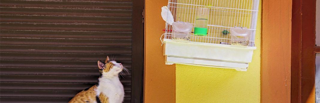 why-do-cats-chatter-at-birds