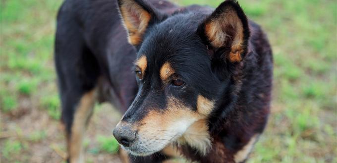 a blind dog