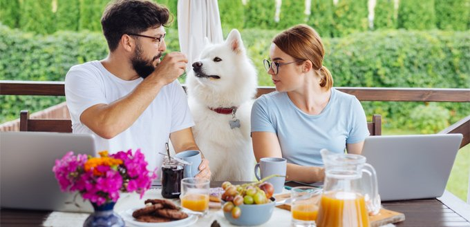 allowed dog food