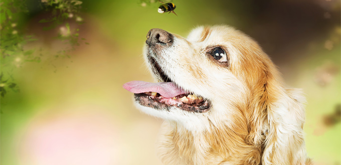 bee on a dog's nose