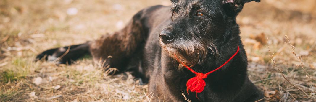 benefits of adopting a mixed breed dog