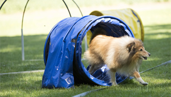 best dog agility tunnels