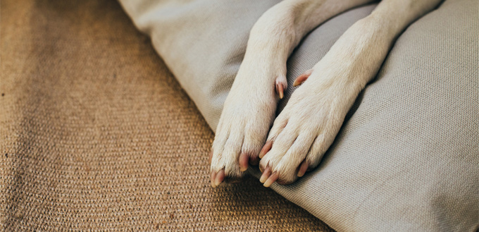 canine's paws