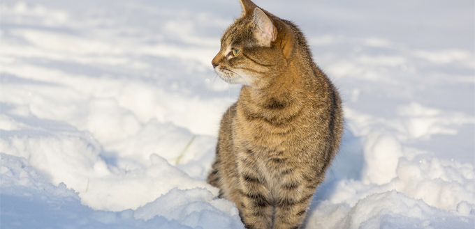 cat feeling comfy in the snow