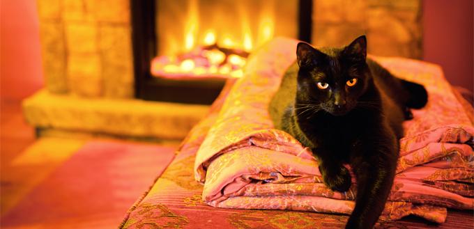 cat in warm