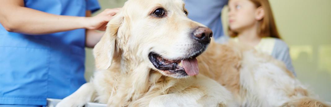 coccidiosis-in-dogs