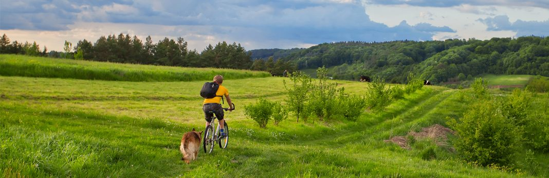 do's and don'ts for mountain biking with a dog