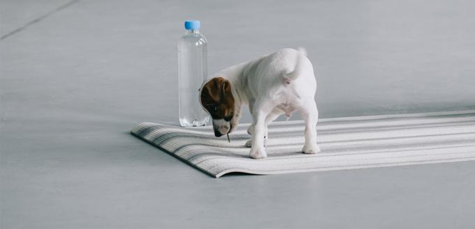 dog exercise