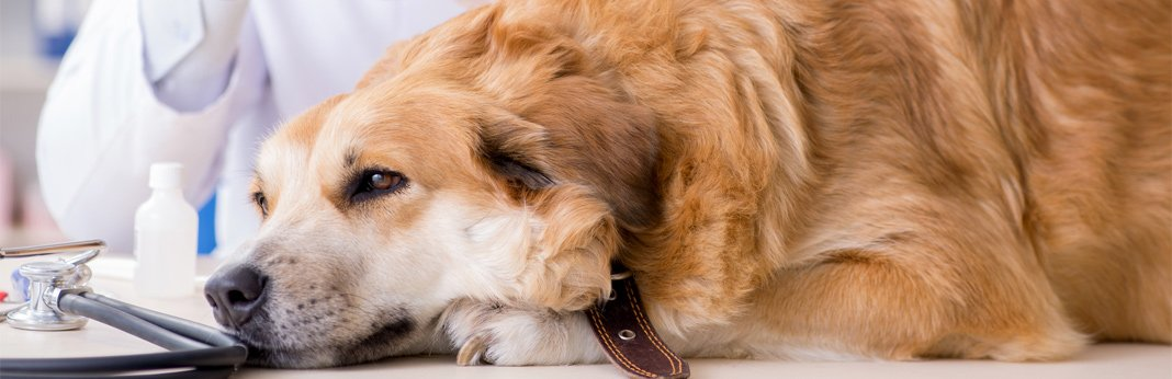 dog-vomiting