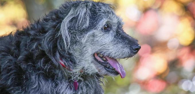 dog's long-term memory