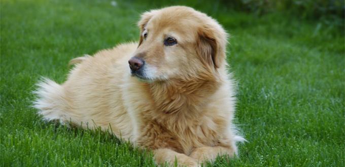 dog's memory