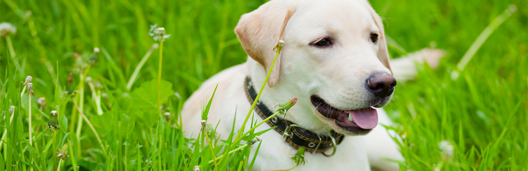 importance-of-antioxidants-in-dog-food