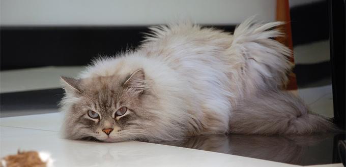 injured tail cat