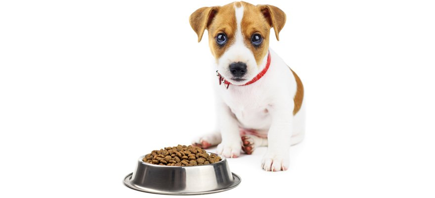 Best Dog Food For Jack Russell Review Amp Buying Guide In 2019
