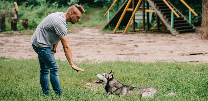 man training husky
