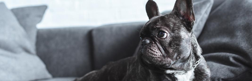 misbehaving-dog