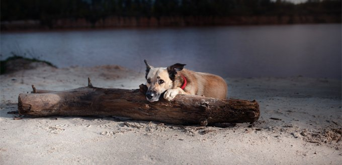 mixed dog breed on the beach