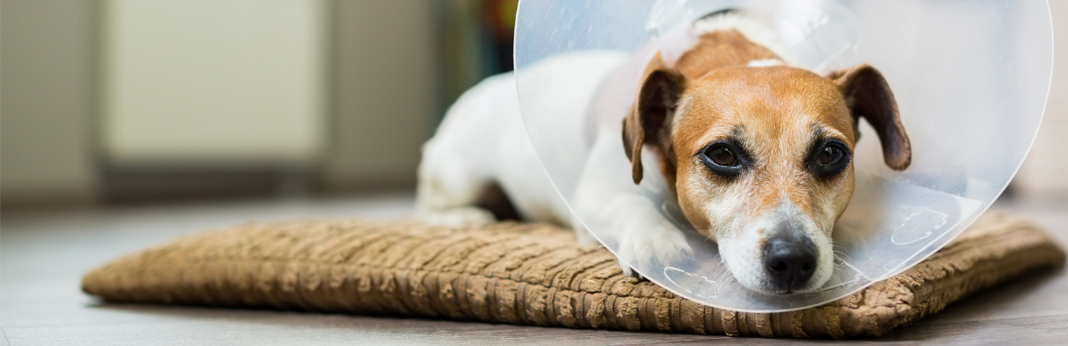 questions-for-the-vet