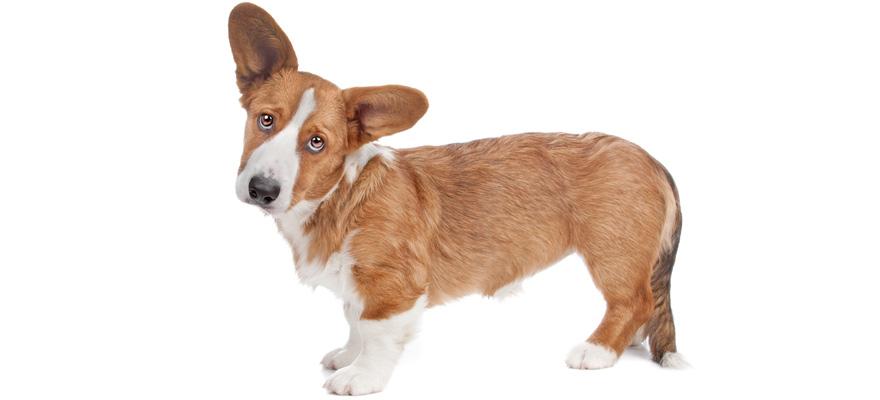 renal function dog food