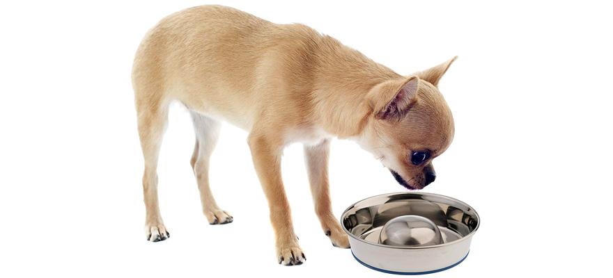 slow dog feeder