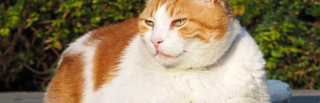 10 cat skin problems