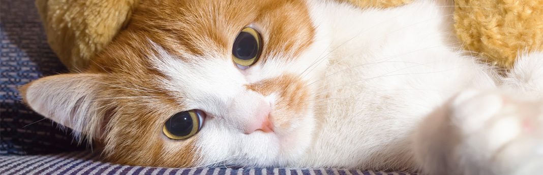 6 secret signs of a sick cat