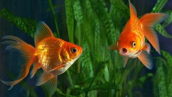 10 best aquariums in 2019 review