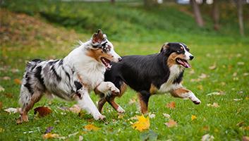 Dog Playpen Reviews Best Dog Playpens Of 2019