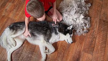Best Dog Shedding Brush