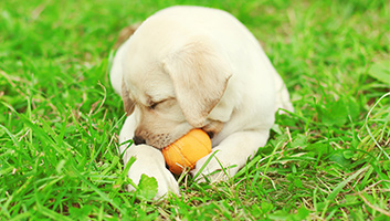 Best Toys For Teething Puppies In 2019