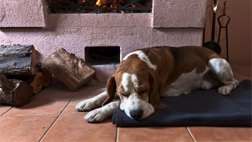 best dog house heaters