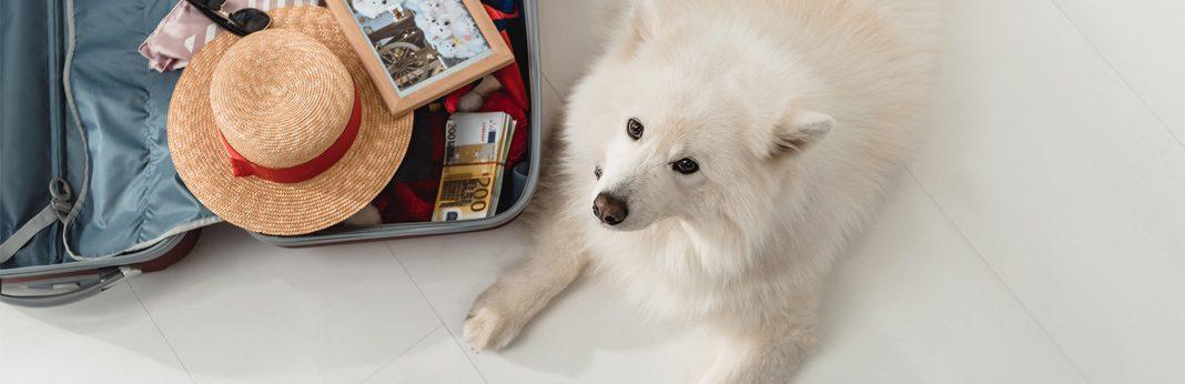 best ways to ship a dog