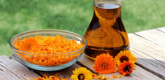 calendula for fungal ear infection