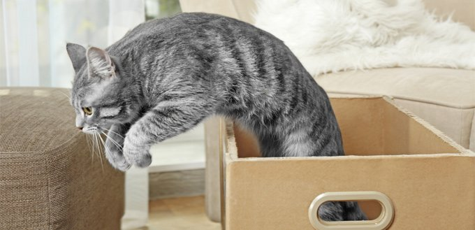 cat jumping out of the box