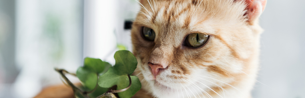 cat-next-to-a-plant