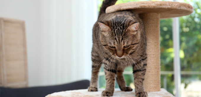 cat on the scratch post