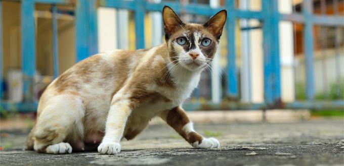 cat with dermatitis