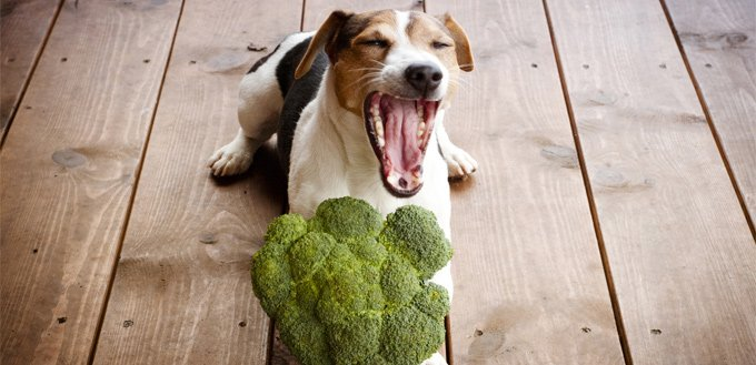 dog eating broccoli