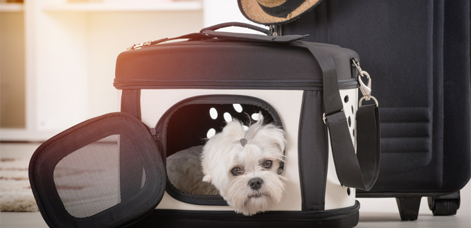 dog in a pet carrier