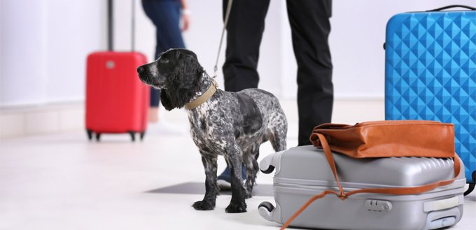 dog ready to fly in an airplane