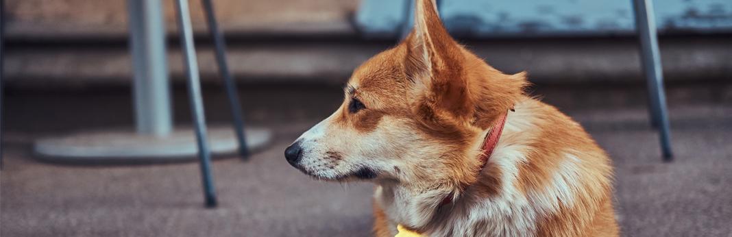 dog-sitting