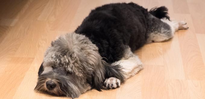 dog stomach ache